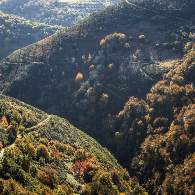 """""""Deep valleys and rounded mountains covered with forest"""" stock image"""