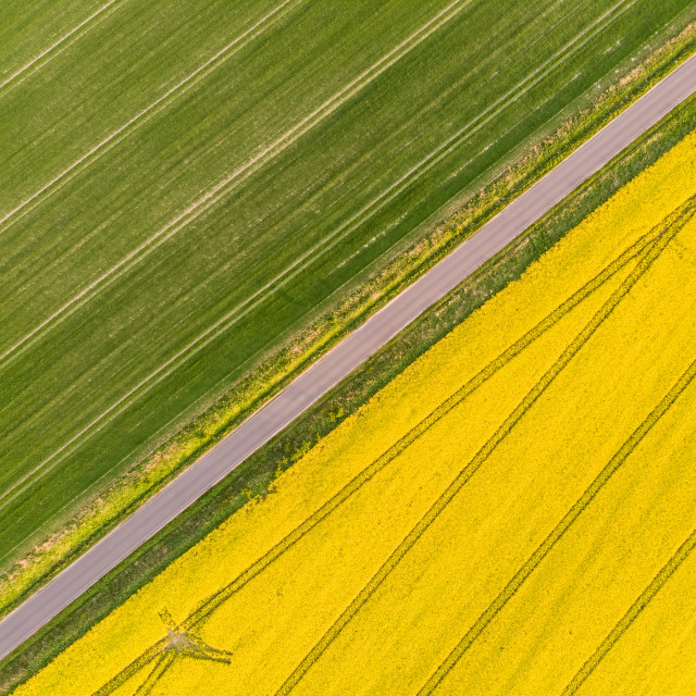 """Yellow colza field and green corn aerial view directly from above"" stock image"