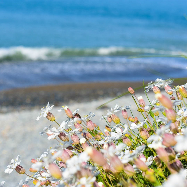 """Flowers on the beach"" stock image"