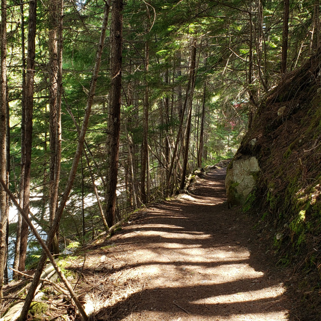 """Sun dappled path through the forest, Kaslo, British Columbia, Canada"" stock image"