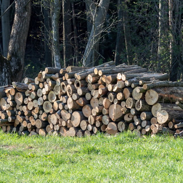 """""""Pile of wood. A view of huge stacks of logs."""" stock image"""