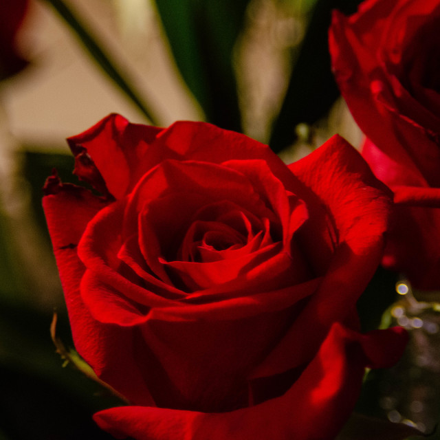 """""""Mother's day Roses"""" stock image"""