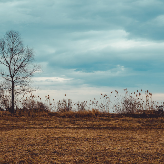 """""""Tree in the field with dramatic clouds in the sky"""" stock image"""