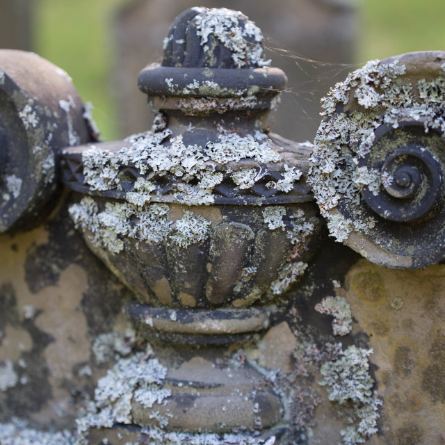 """Lichen On a Tombstone"" stock image"