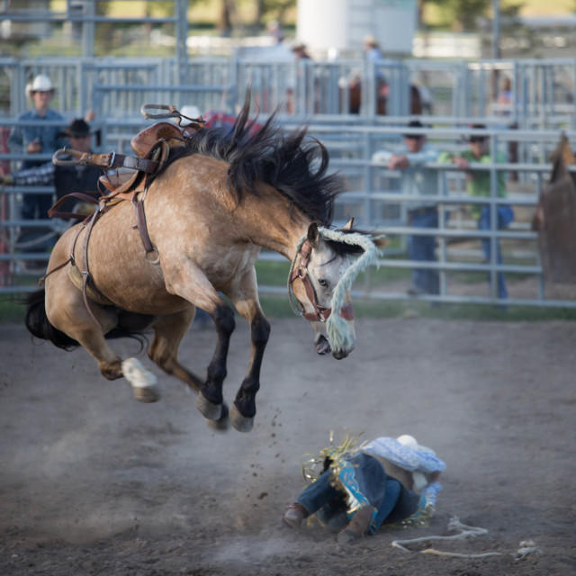 """""""Dramatic Moment at the Nanton Rodeo"""" stock image"""
