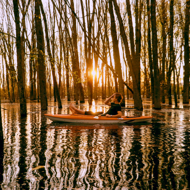 """""""Flooded forest"""" stock image"""
