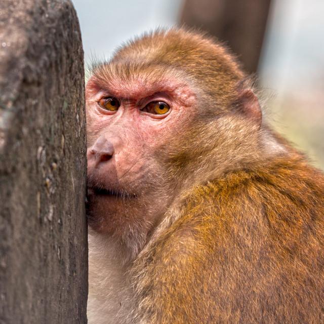 """Primates"" stock image"