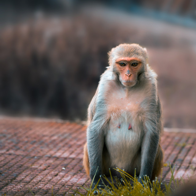 """Primate"" stock image"