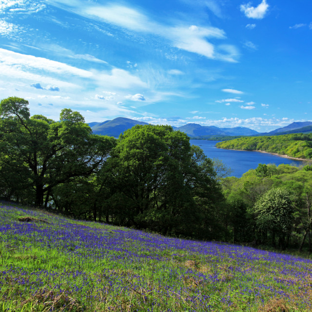 """View of Loch Lomond"" stock image"
