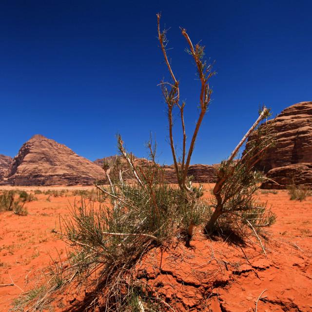 """""""Wadi Rum desert"""" stock image"""