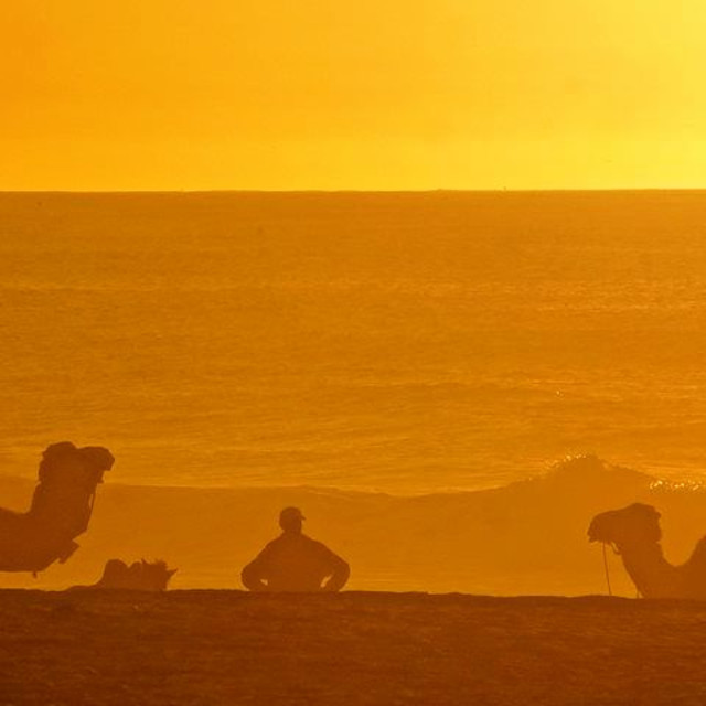 """""""Yellow Silhouette Camels near the Sea"""" stock image"""