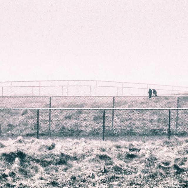 """Two Blackbirds in a Scottish Fog"" stock image"