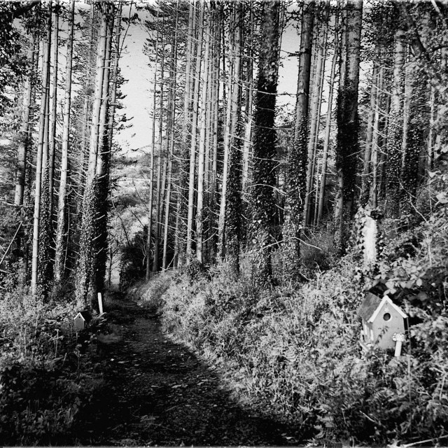 """""""Forest of the Wee Folk Black and White"""" stock image"""