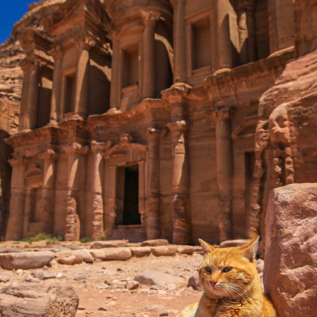 """Cat with Ad Deir (The Monastery)"" stock image"