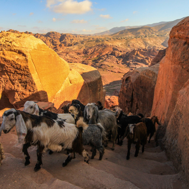 """Goats in Petra"" stock image"