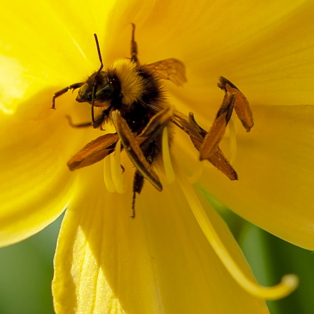 """World Bee Day"" stock image"