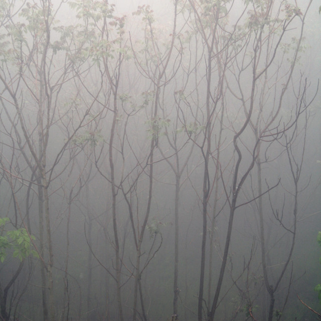 """trees in fog"" stock image"