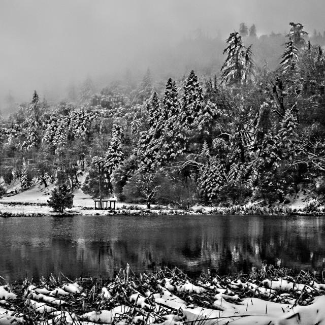 """Winter Pond"" stock image"