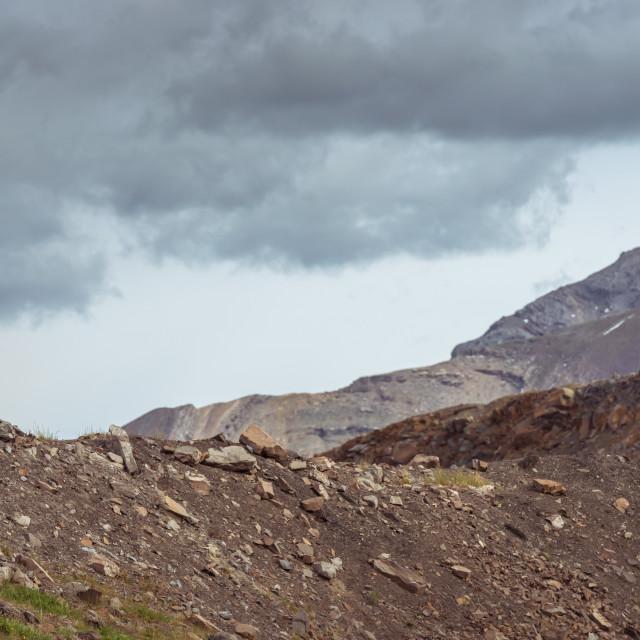 """Bighorn Sheep in Jasper National Park"" stock image"