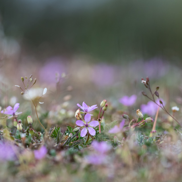 """Tiny pink flower in a low angle image"" stock image"