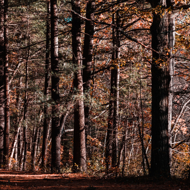 """Beautiful Forest Scene during Autumn in New England"" stock image"