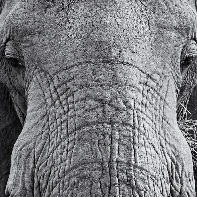 """""""Sad Old Elephant"""" stock image"""