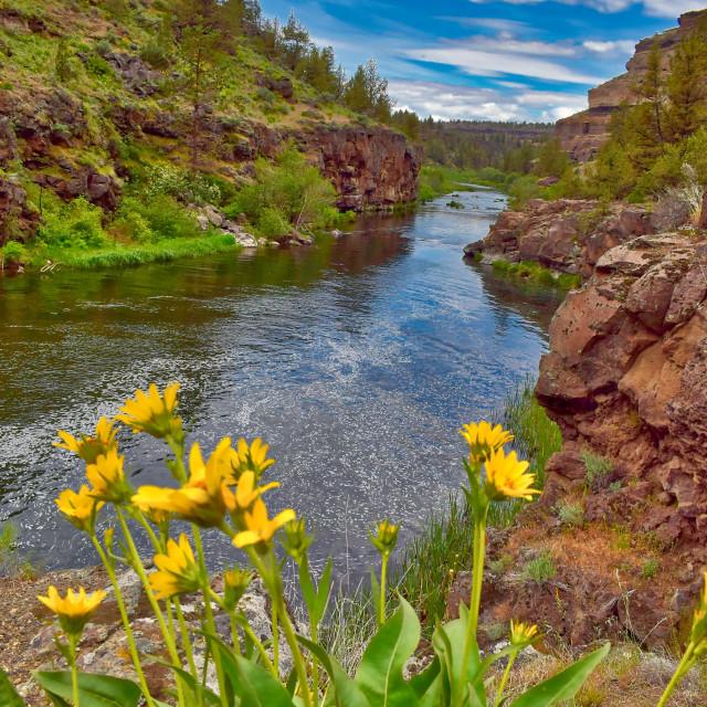 """The Deschutes River in Central Oregon"" stock image"