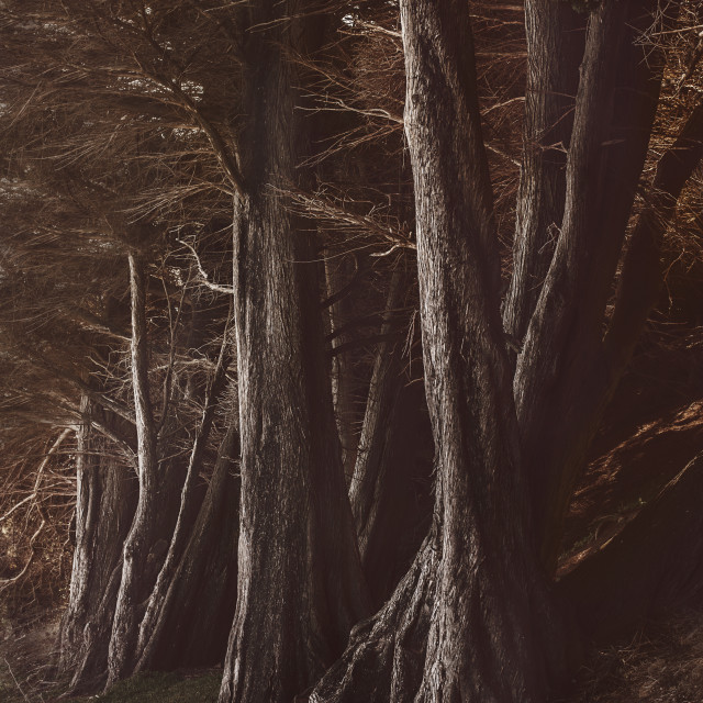 """Moody trees"" stock image"