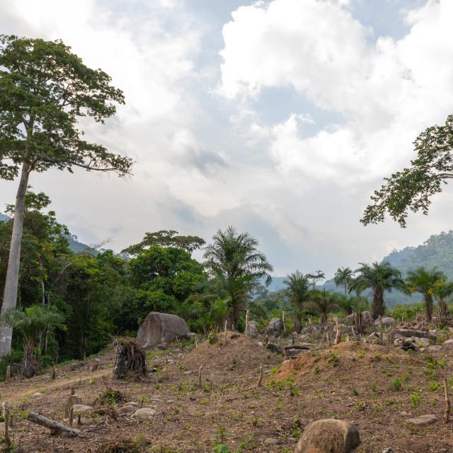 """Deforestation in the countryside, Tonkpi Region, Man, Ivory Coast"" stock image"