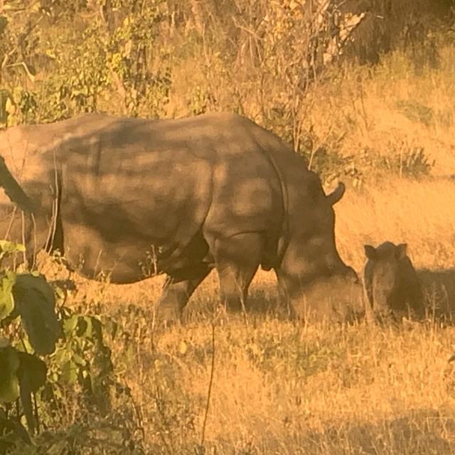 """Rhino and her baby"" stock image"