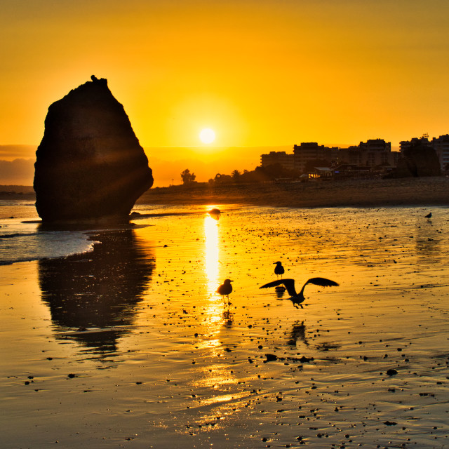 """golden hour, seagulls on the sandy beach"" stock image"