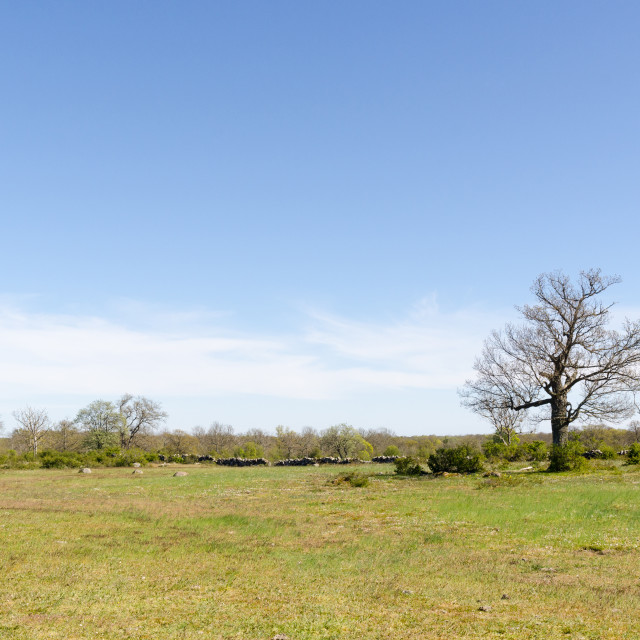 """Open landscape with a big oak tree by springtime"" stock image"