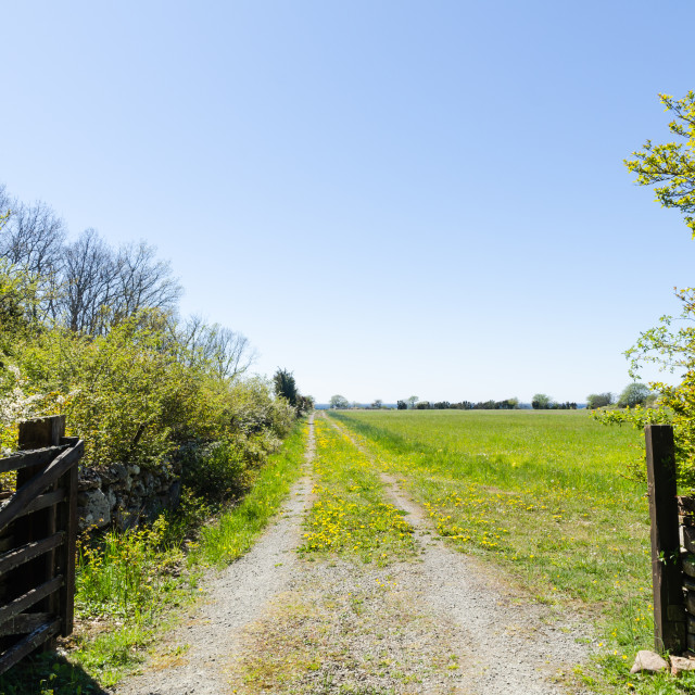 """Open gate to a country road with yellow dandelions"" stock image"