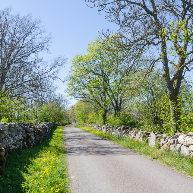 """Springtime view of a beautiful country road surrounded with dry"" stock image"