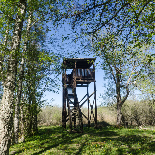 """Bird watching tower in a beautiful deciduous forest by springtim"" stock image"