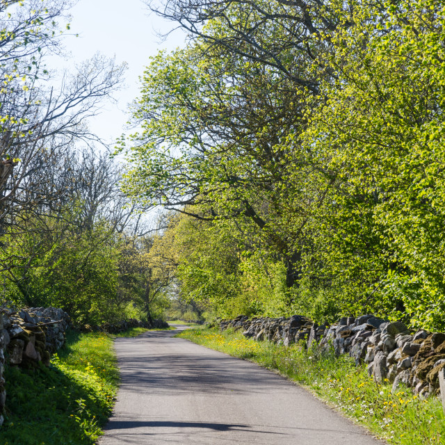 """""""Country road with dry stone walls by leafing time"""" stock image"""