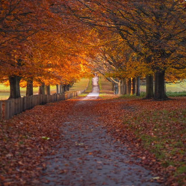 """Autumn view"" stock image"