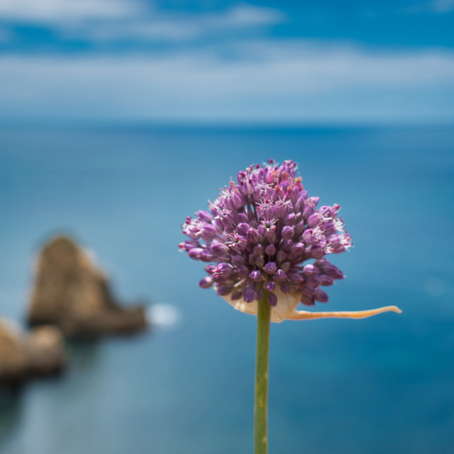 """""""Flower head alone with the sea on background Still Life"""" stock image"""