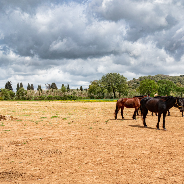 """Horses free in countryside landscape"" stock image"