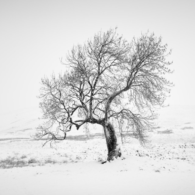 """The Frandy Tree"" stock image"