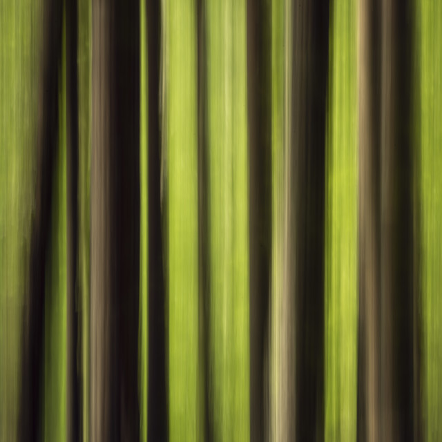 """""""Abstract woodland"""" stock image"""