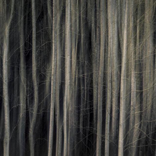 """Spooky wood"" stock image"