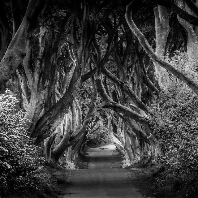 """Dark Hedges Game of Thrones Northern Ireland"" stock image"