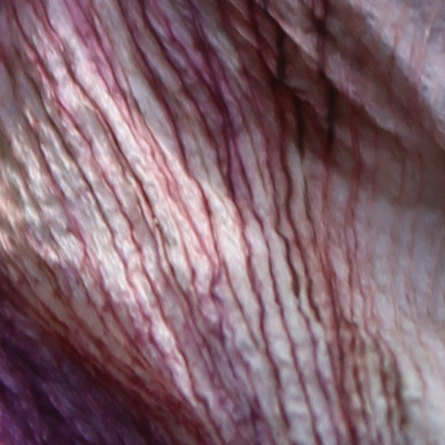 """purple veins"" stock image"