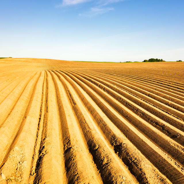 """""""Agricultural landscape, arable crop field. Potatoes field after"""" stock image"""