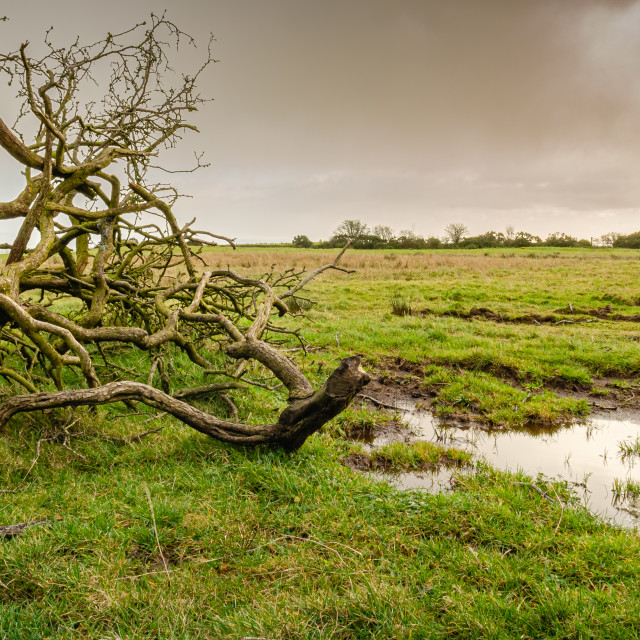 """Fallen Tree Lying in a Field"" stock image"