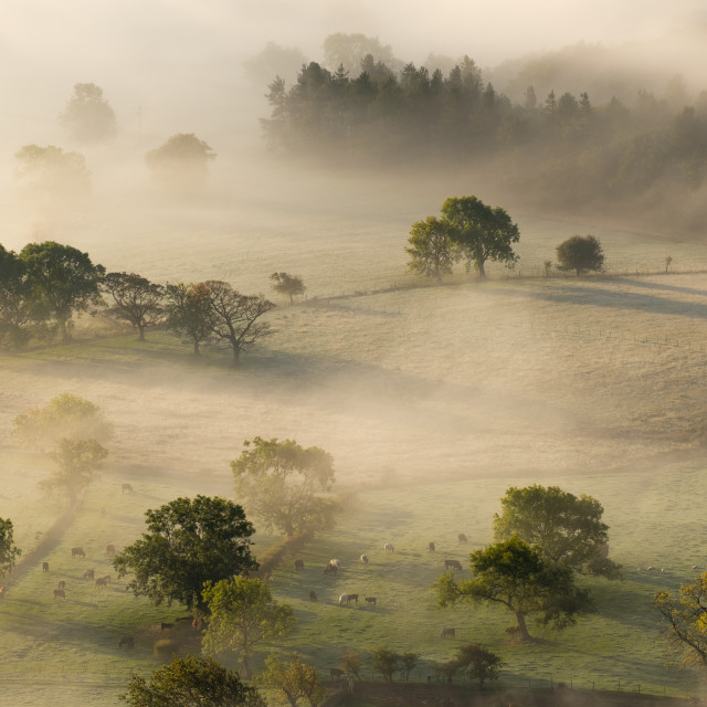 """Mist rolling through pasture and trees in the Hope Valley"" stock image"