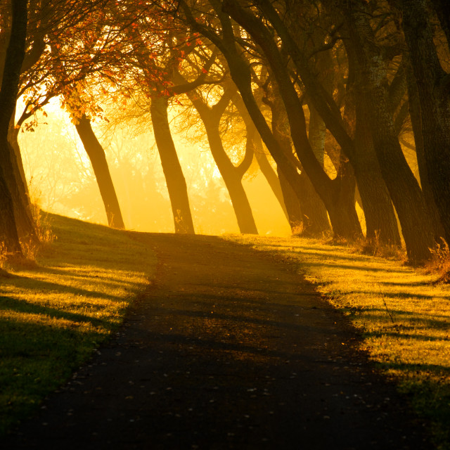 """Early Sun streams through an Avenue of Trees"" stock image"