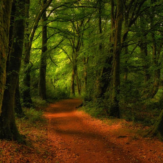 """""""Park trails"""" stock image"""