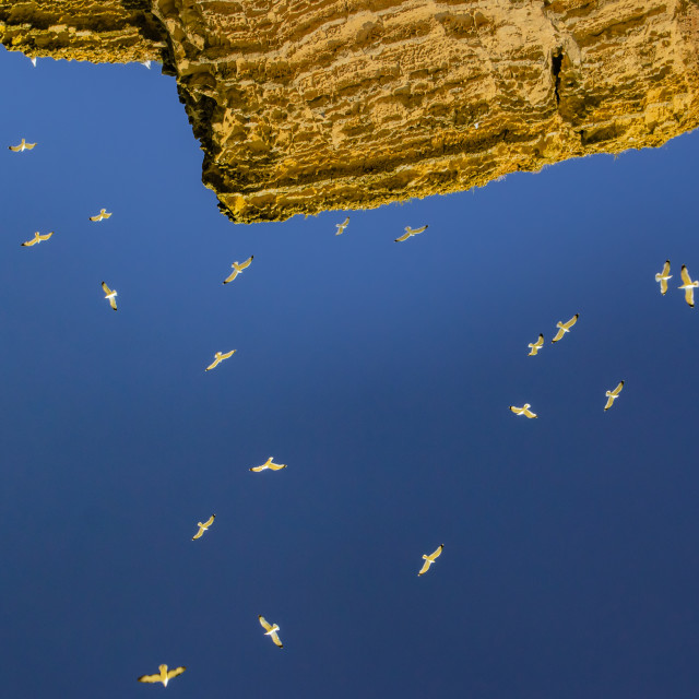 """Seagulls above Cliffs"" stock image"